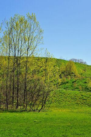 Trees in field, clear blue sky, Toronto, Canada