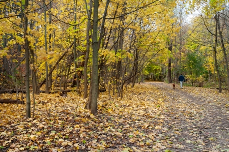 Autumn hiking trail with man and dog walking in distance, Toronto photo