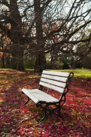 under ground: Empty bench under maple trees, falling leaves on ground  Stock Photo