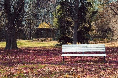 Empty bench under maple trees wraped into autumn colors