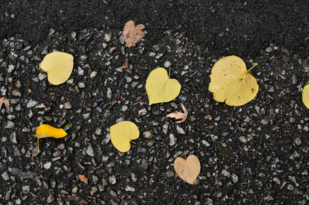 Autumn leaves on wet road photo