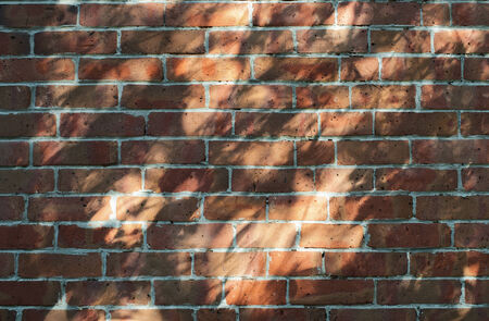 Light and shade of a tree against a brick wall