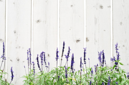 Wooden fence with flower border photo