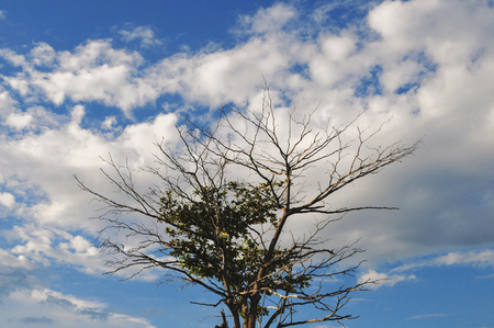 Tree branch background Stock Photo