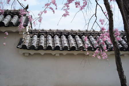 Detail of Wall of Himeji Castle and Cherry Blossom