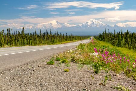 Alaska Range mountains on horizon at the end of long highway with green trees on side of highway. Pink flowers are on the side of the highway in Alaska, USA.
