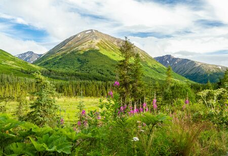 Idyllic Alaskan landscape scene with pink wildflowers in foreground, green alpine meadow in mid-ground, and mountains in background with blue sky.
