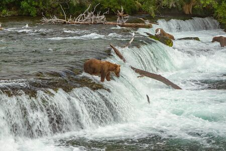 Three Alaskan grizzly bears fishing for salmon at Brooks Falls, Alaska, USA. A single salmon can be seen in midair with a bear waiting to catch the fish. Reklamní fotografie