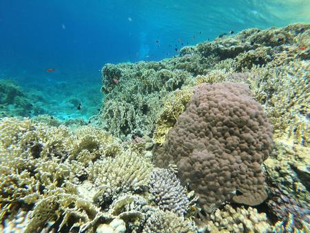 Red Sea Coral Reef off Sharm El Sheikh, Egypt