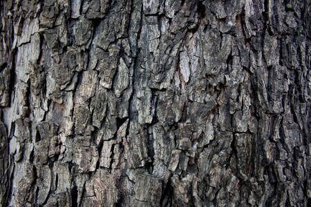 Tree bark, natural background photo