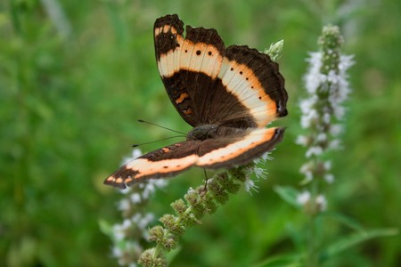 mariposa: Brown Butterfly side Stock Photo