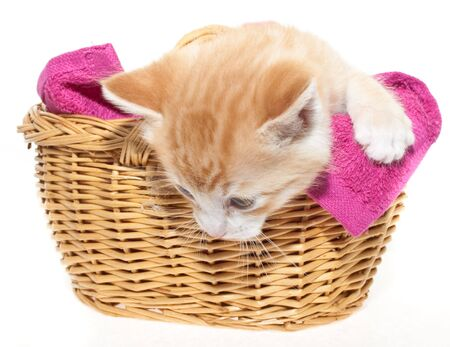 This is a ginger kitten in a brown basket Stock Photo - 5369568