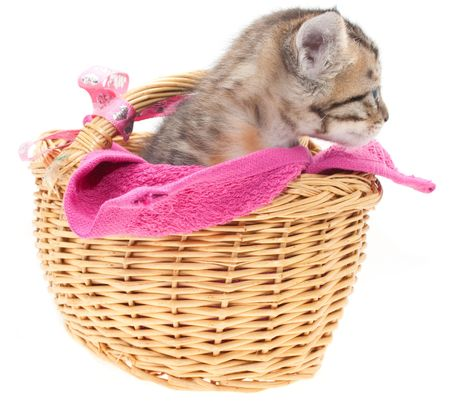 This is a gray kitten in a brown basket photo