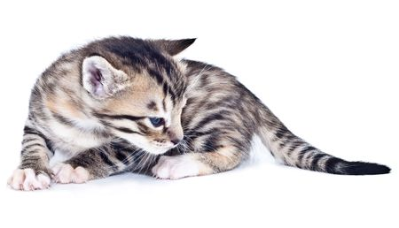 This is a kitten with black stripes on photo