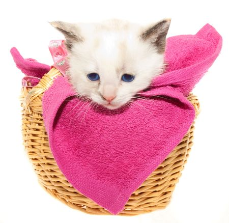 This is a white kitten in a brown basket photo