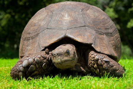turtle in green grass photo