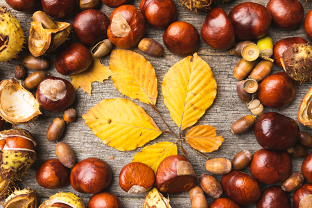 Autumn composition, arrangement, concept still life with pretty chestnuts, acorns and leaves on wooden background. Seasonal frame from autumn harvest. Flat-lay visualization. Table top view