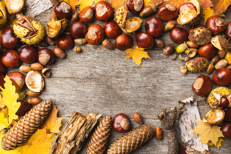 Autumn arrangement, concept still life with chestnuts, cones, acorns, leaves, bark on wooden background. Seasonal frame from autumn harvest. Flat-lay visualization with copy space. Table top view.