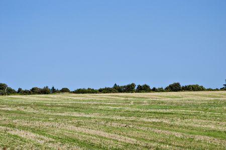 hay field: Campo di fieno, che � stato recentemente raccolti