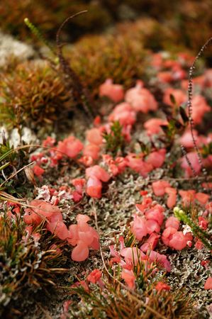 Red Fungus found high in the mountains along the Inca Trail