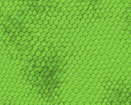 reptile skin background of green snake