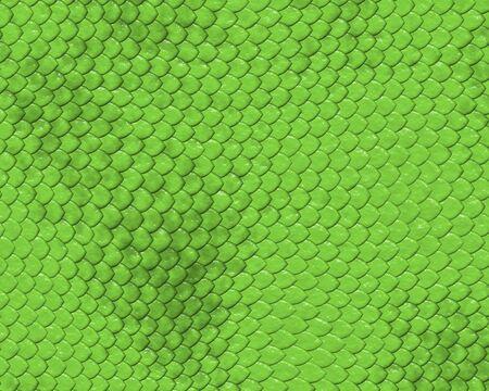 reptiles fond de la peau de serpent vert