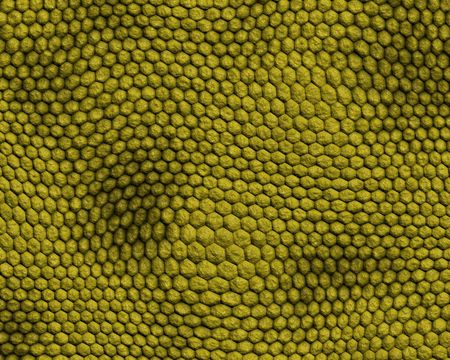 reptile skin background of rough