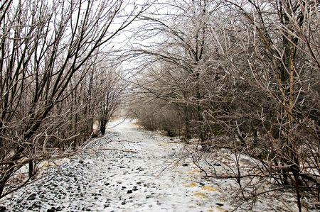 walking trail: Inverno, tempesta di ghiaccio, a piedi lungo il sentiero