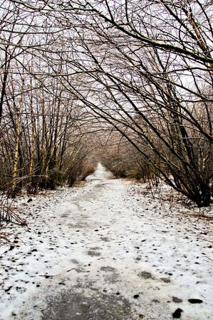 Winter weather, ice storm, along walking trail
