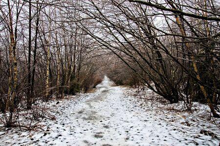 L'hiver, la temp�te de verglas, le long de sentiers de randonn�e p�destre Banque d'images