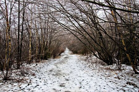 Winter weather, ice storm, along walking trail