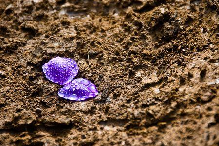 purple flower petals on dark brown mud