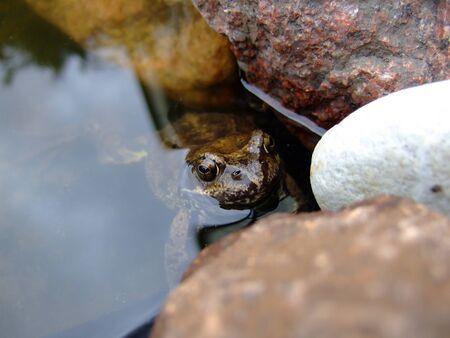 nahaufnahme: Nahaufnahme vom Frosch im Gartenteich