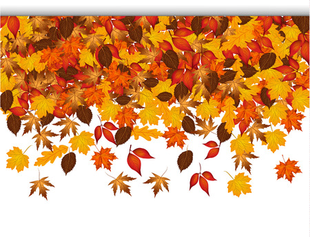 autumn leaves falling: Autumn leaves falling from top