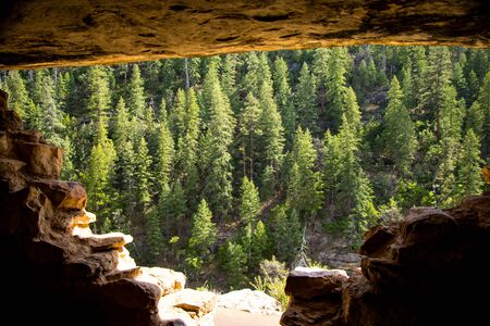 the dwelling: Forest From Inside a Cliff Dwelling in Walnut Canyon
