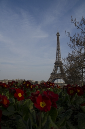 Eiffel Tower in Paris with a foreground of pretty fresh red flowers against a hazy blue sky with copyspace