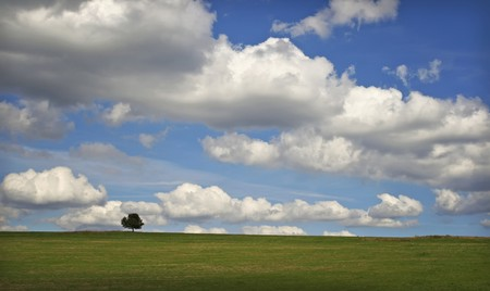 horizont: alone tree on cloudy horizont Stock Photo