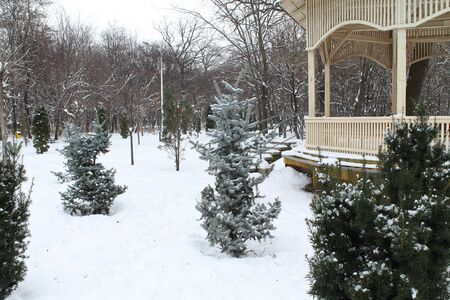 immaculate: Beautiful, immaculate, winter park scenery Stock Photo