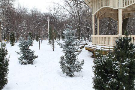 immaculate: Hermoso, impecable, paisajes parque de invierno