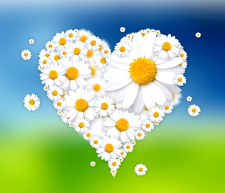 white heart made of daisies illustration