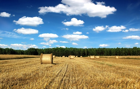 beautiful countryside landscape sheaves and field with blue sky Stock Photo - 14605498