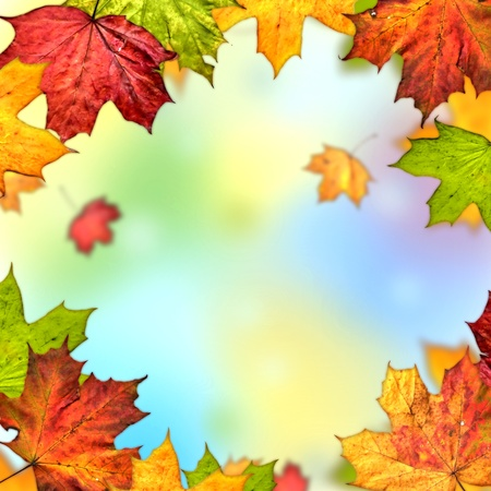 colorful autumn leaves frame Stock Photo - 14619715