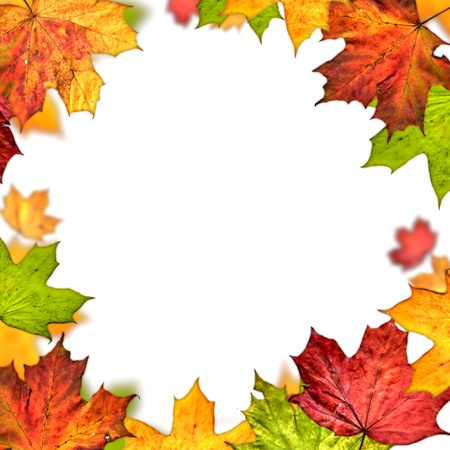 autumn leaves frame isolated on white background photo