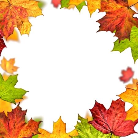 feuilles d'automne cadre isolé sur fond blanc