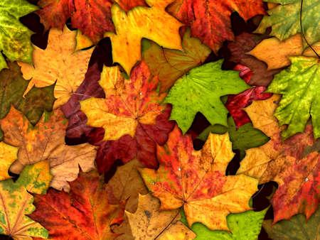 dry autumn leaves background Zdjęcie Seryjne