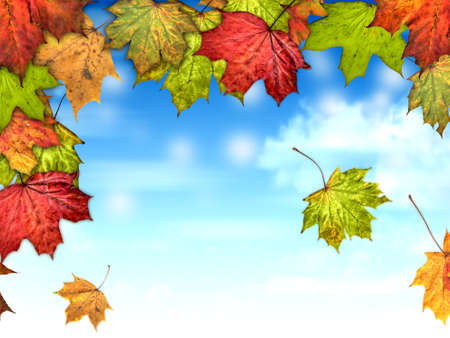 autumn leaves with the blue sky background Stock Photo - 14619691