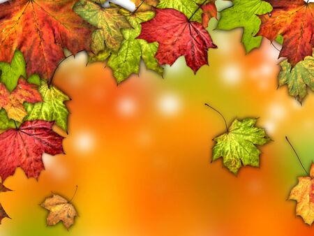autumn leaves background  Stock Photo - 14619714