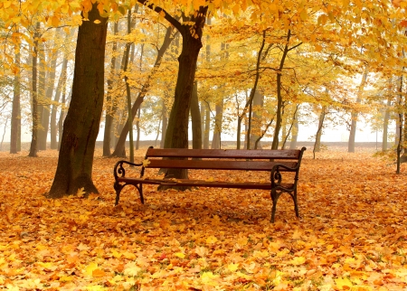 bench in golden autumn park in foggy day photo