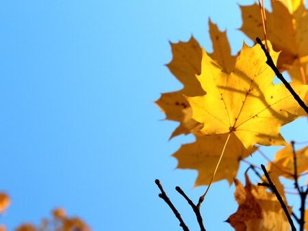 autumn leaves on blue sky background with copy space Stock Photo - 16214992