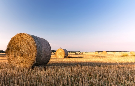 straw bales in a field with blue sky, summer morning day